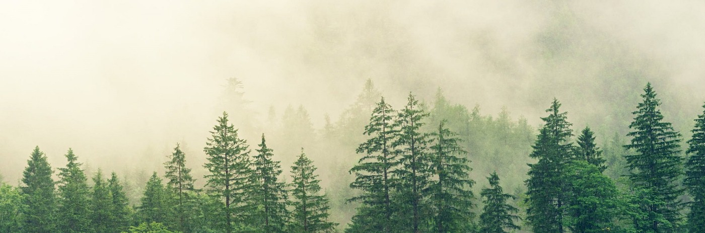 Does A Forest or Wild Fire Resistant Product that is Actually Safe for Fish, Wildlife and the Environment Exists? YES!